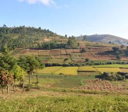 L'agriculture familiale à Madagascar