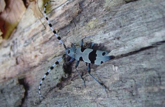 Impacts des activités humaines passées et présentes sur la biodiversité des forêts de montagne