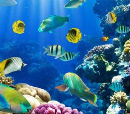 La conservation de la biodiversité marine : un défi pour le droit international
