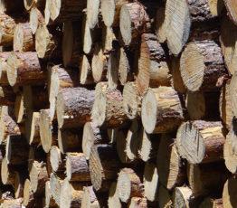 Adaptations de la gestion forestière aux changements climatiques