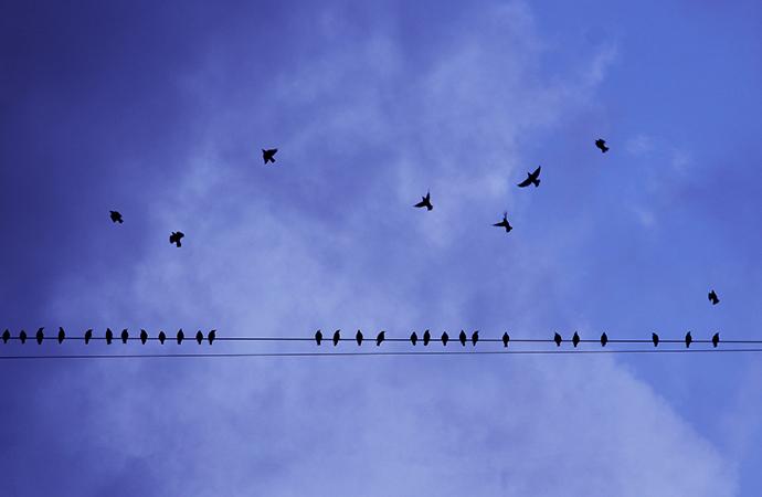 """[#ScienceDurable] Ce mois-ci, la campagne s'intéresse à la thématique """"énergie et biodiversité"""""""