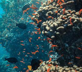 #ScienceDurable – Conservation et la gestion durable du milieu marin