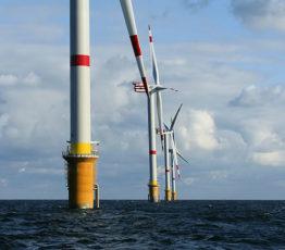 #ScienceDurable – L'impact des éoliennes marines sur la biodiversité