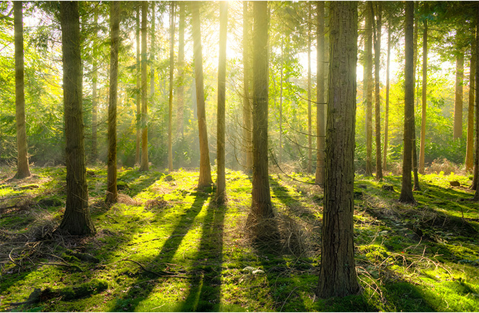 Comment développer les Obligations réelles environnementales (ORE) en France ?