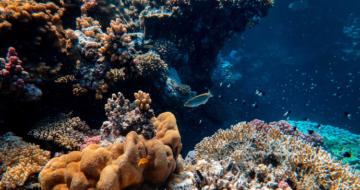 [Communiqué] Protéger l'océan pour résoudre conjointement les crises du climat, de l'alimentation et de la biodiversité