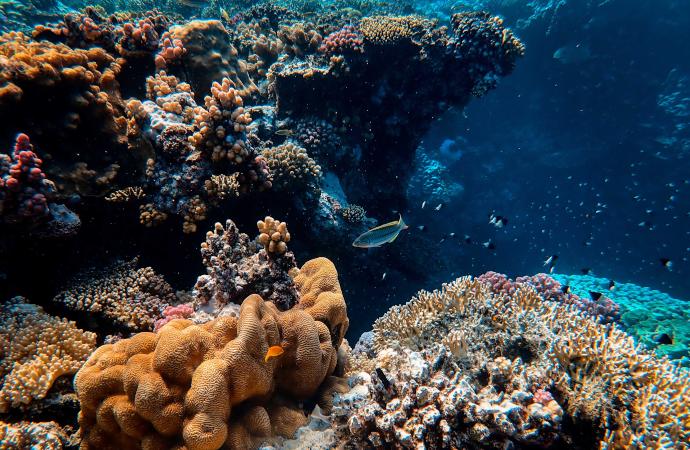 Protéger l'océan pour la préservation de la biodiversité, l'approvisionnement en nourriture et l'atténuation du changement climatique