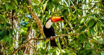 [FRB-Cesab] Ouverture de l'appel à projets SYNERGY avec SinBiose / FAPESP / CEBA sur la biodiversité néotropicale