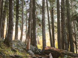 La taxation des forêts européennes : approche comparative