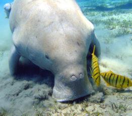 Mieux protéger la mégafaune marine grâce aux réseaux sociaux et à l'intelligence artificielle