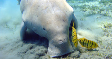 [Press release] A better protection of marine megafauna through social networks and artificial intelligence
