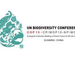 COP 15 Biodiversité : la nécessaire intégration des enjeux climatiques et financiers au cœur des dernières annonces